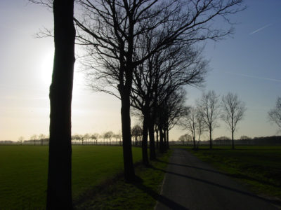 Bomen Spreekwoorden En Citaten