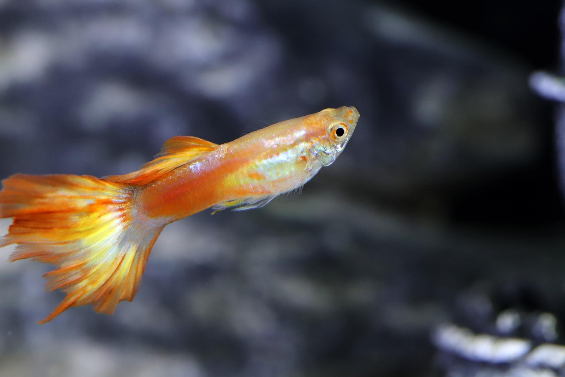 Vissen Spreekwoorden En Citaten